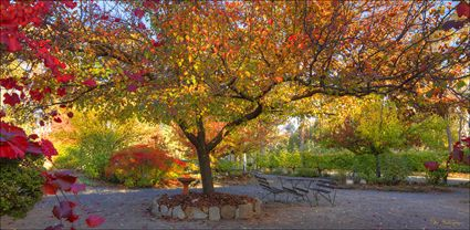Colours of Autumn - Beechworth - VIC T (PBH4 00 13474)